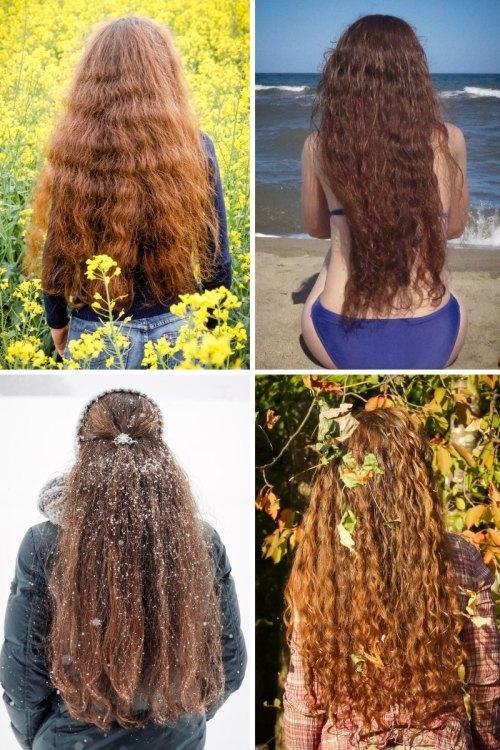 Die Haarbande